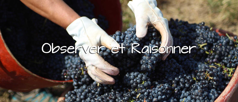 Notre Philosophie - Domaine Tano Péchard - Grands vins du Beaujolais